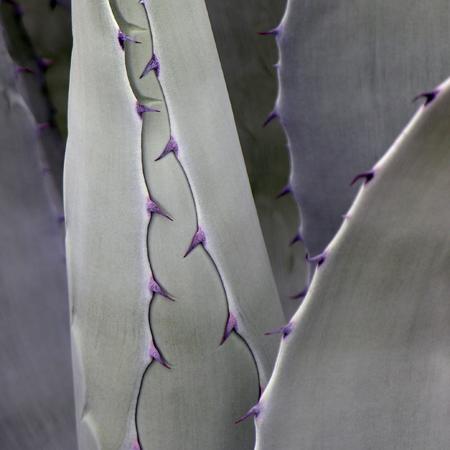 sq-bluetooth-yucca.jpg